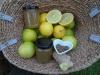 citrus-bergamia-2-scaled